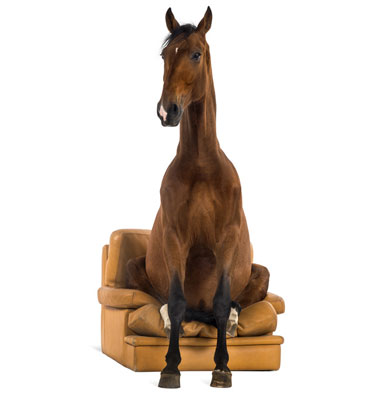 horse-on-chair-1