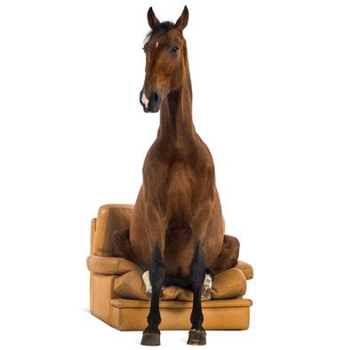 """Kurs """"präparative Anatomie des ganzen Pferdes"""" absolviert"""